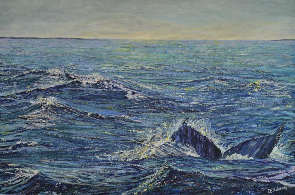 Atlantic Ocean Fluke